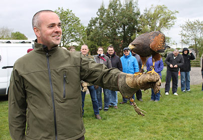 3 Hour Falconry Experience